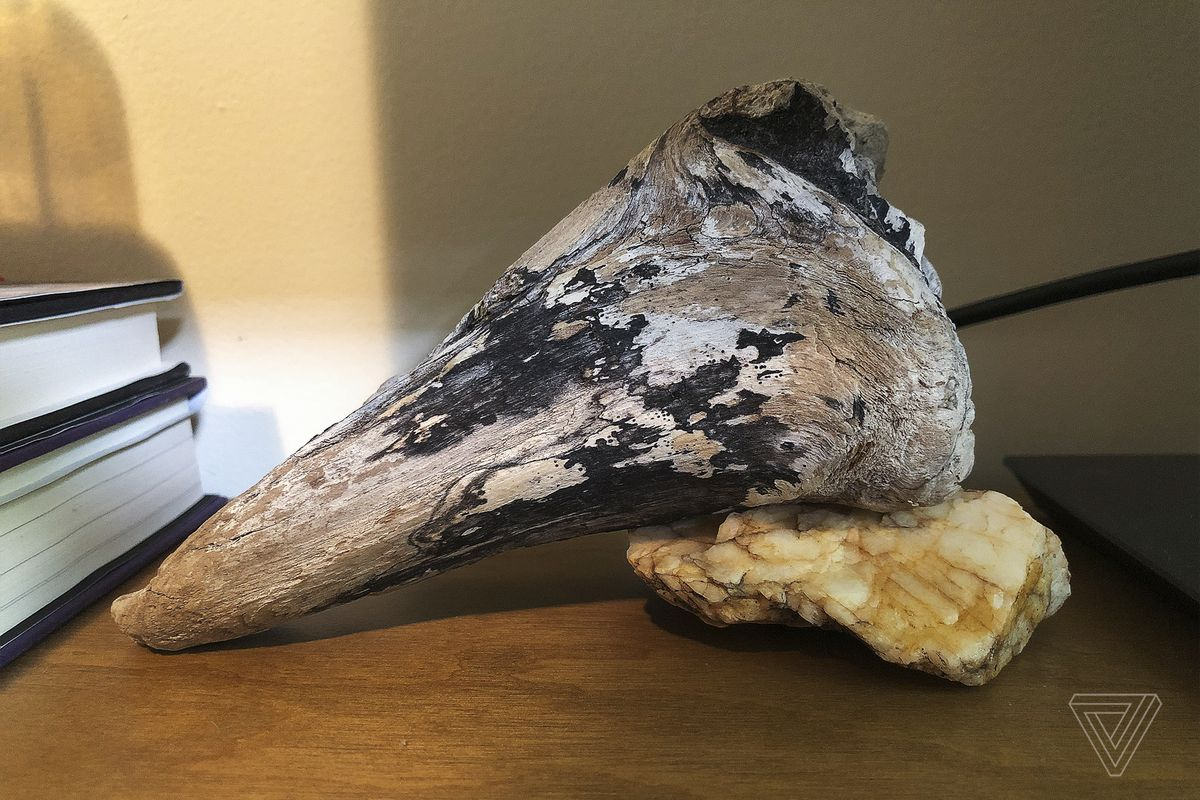 Driftwood from the shores of the San Juan Islands