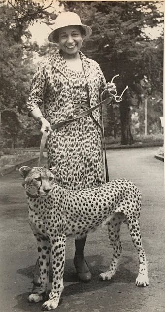 In one of the photos available in the Claude Barnett and Etta Moten Barnett estate sale being handled by Estate Sale Goddess, Etta Moten Barnett walks a Leopard named Dikkhill after leaving the National Palace in Ethiopia, while a guest of Haile Selassie.