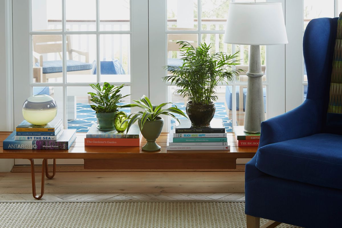 Interior House Plants