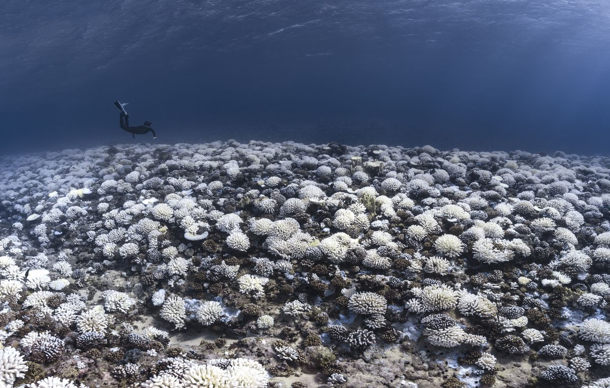 Coral Reefs And White Death
