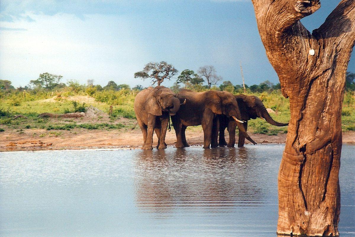 elephant water hole (wikimedia)