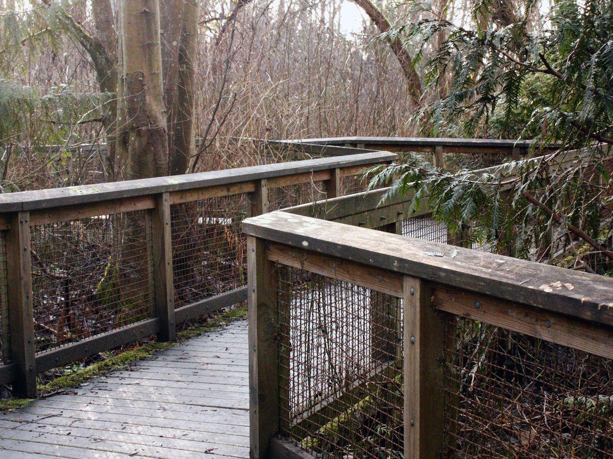 A wooden bridge zigzags through evergreen trees.