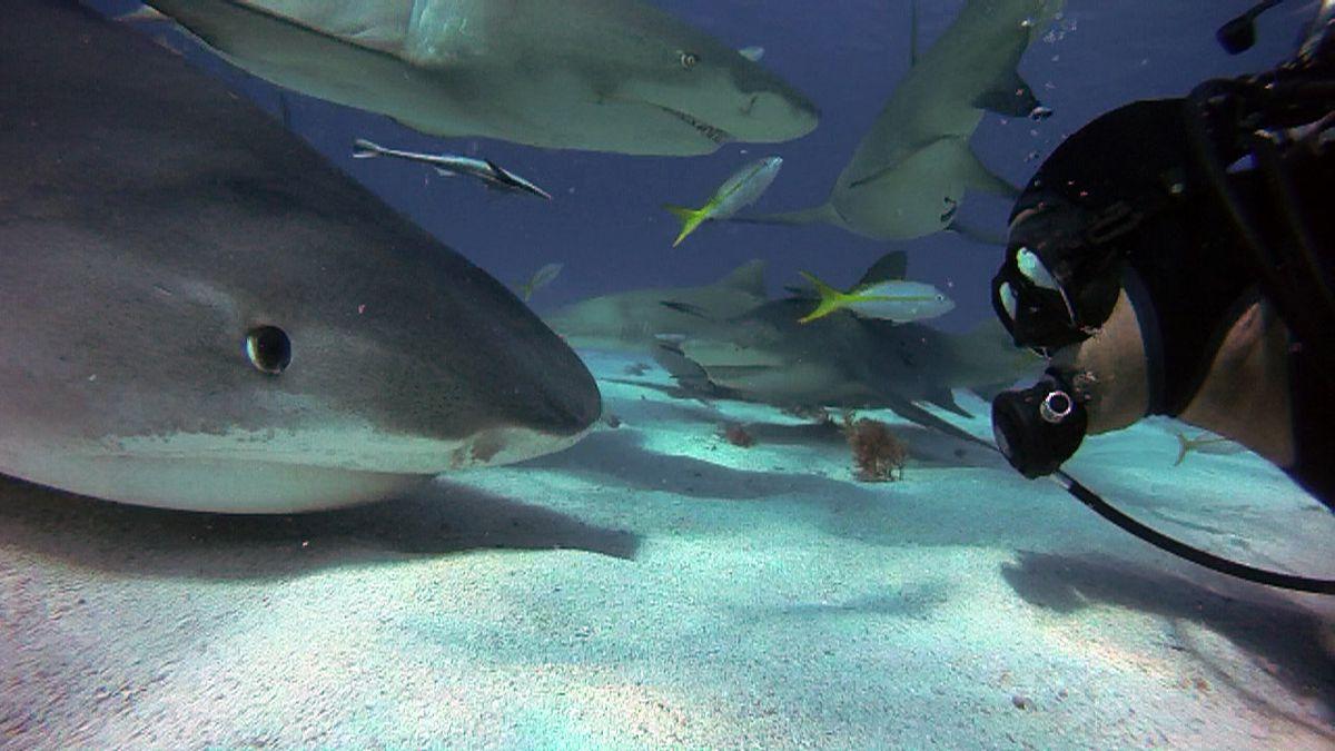 shark human face to face