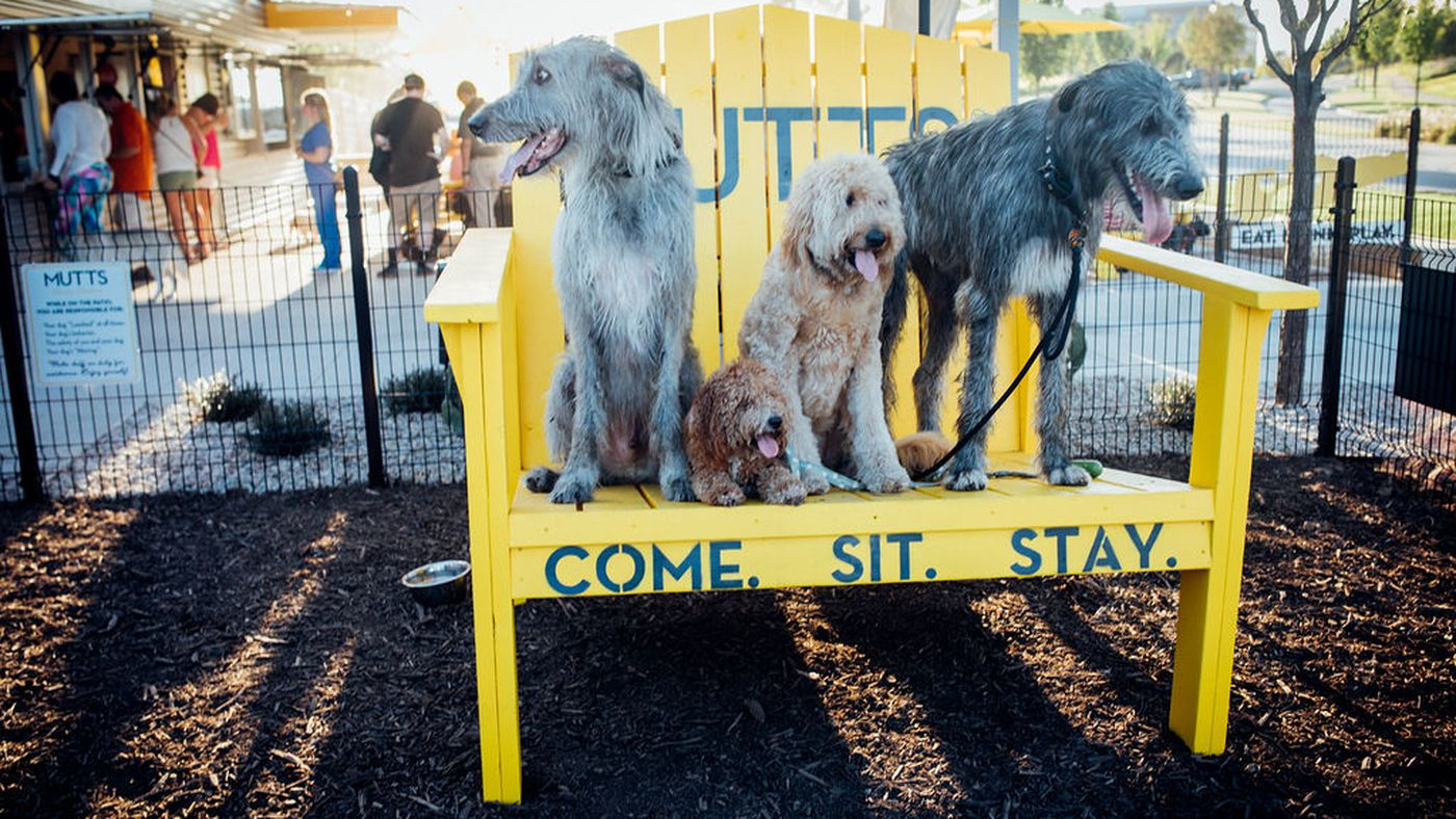 Mega-Dog-Friendly Haven Mutts Canine Cantina Is Opening in