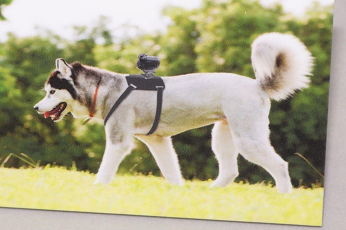 sony dog camera (impress watch)