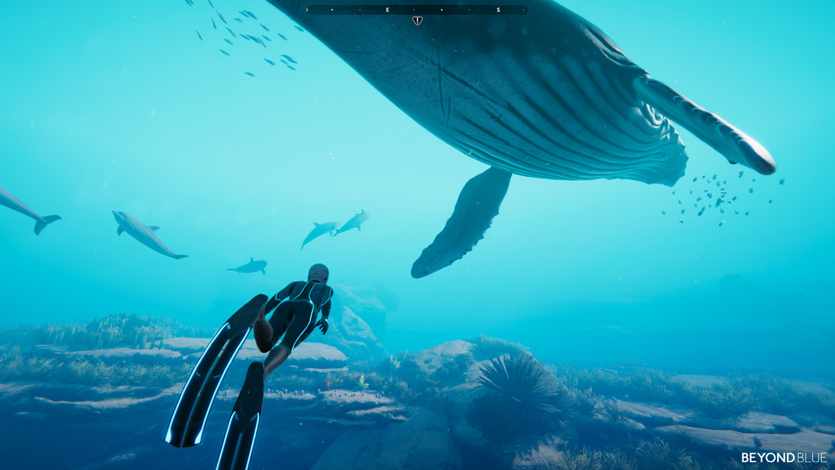A human swimming alongside a large whale