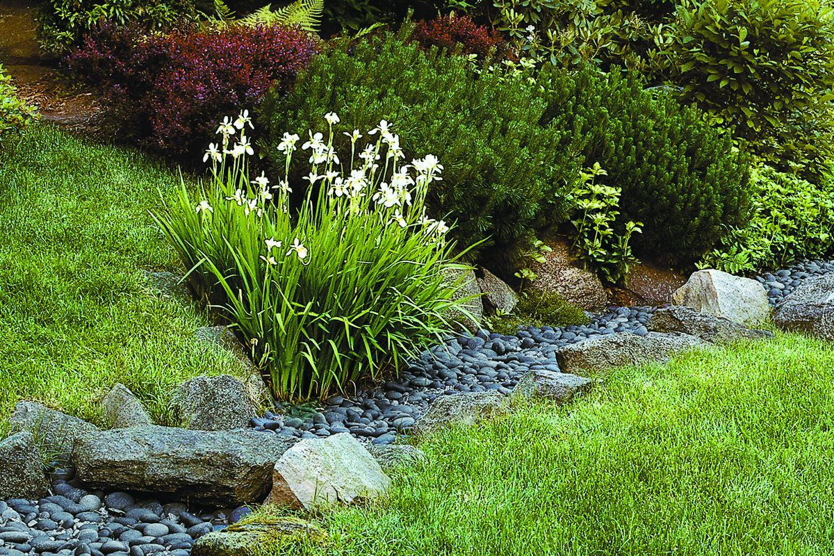 Use Landscaping To Deal With Storm Water This Old House