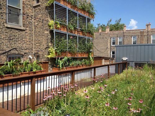Meet Molly Meyer Green Roof Master And Curbed Young Gun