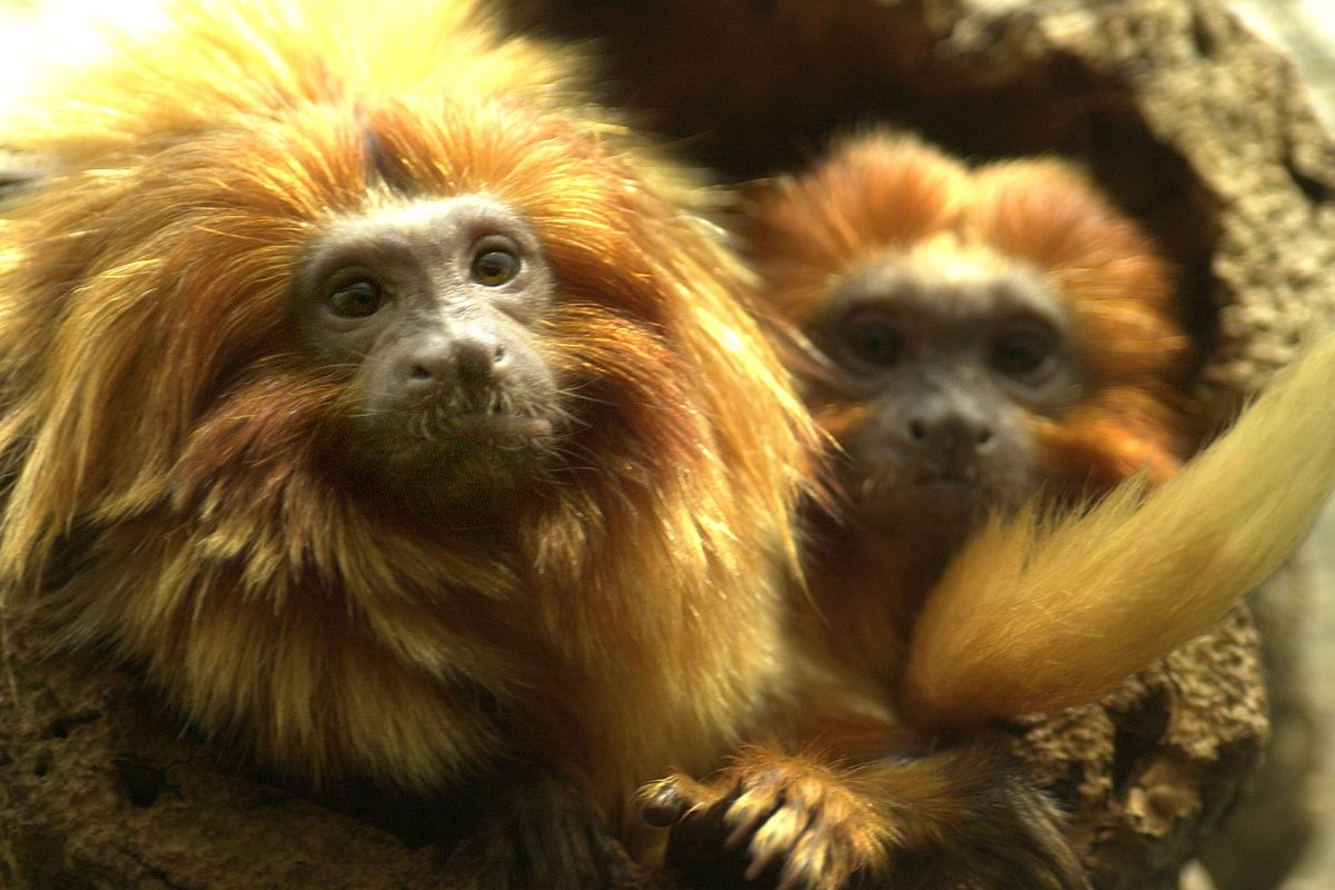 National Zoo Accreditation Delayed