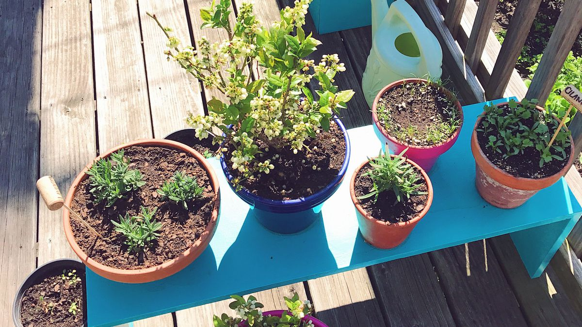 How To Create A Garden On Your Chicago Balcony Tiny Deck Or