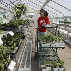 Jessica Wright shops for vegetables to plant in her garden at Glover Nursery in West Jordan on Tuesday, May 5, 2020.