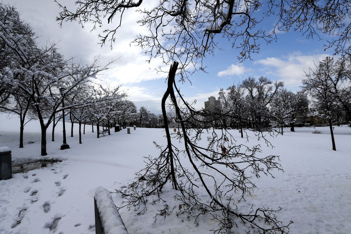 Tree limbs snapped by snow from a spring storm litter the Capitol grounds in Salt Lake City on Friday, March 29, 2019.