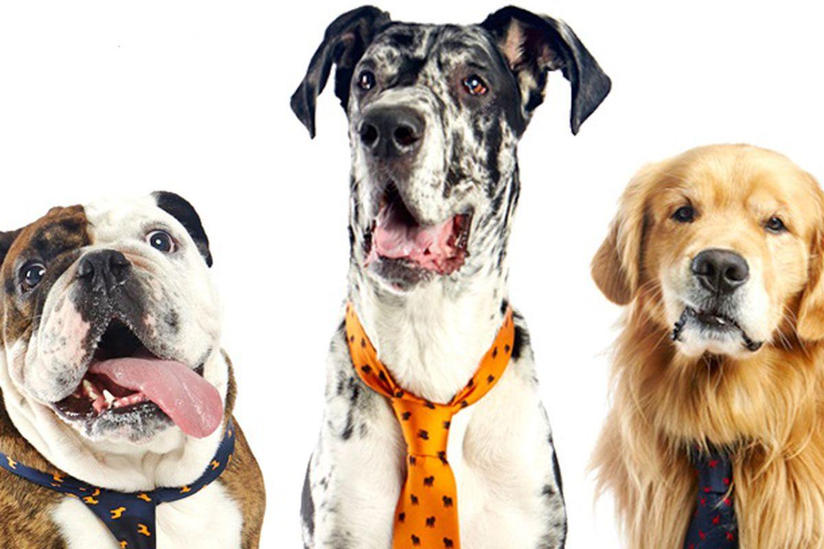 """Image via <a href=""""http://www.bows-n-ties.com/dogsnties/"""">Bows 'N Ties</a>"""
