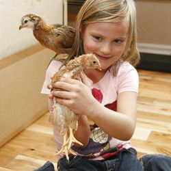 Olivia Buxton (6) plays with chicks the family is raising for eggs. She is holding Buttercup while Sweetie sits on her shoulder.