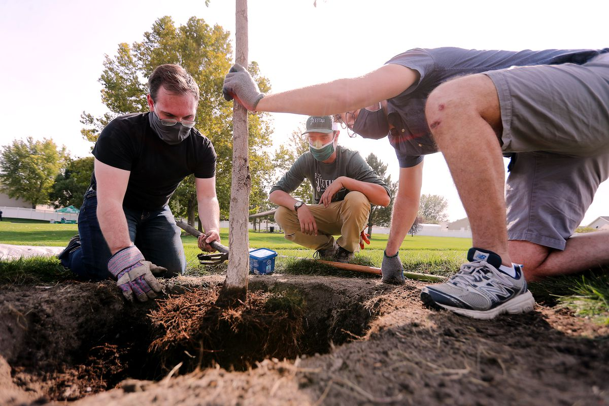 Jack Jacob, volunteer coordinator for Tree Utah, center, helps volunteers Derek Wardle and Bill Hereth plant a tree at Sommerset Park in Lehi during a Tree Utah community planting event on Wednesday, Sept. 23, 2020.