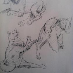 Sketch samples BYU undergraduate Taylor Holt submitted with her application to the school's competitive animation program