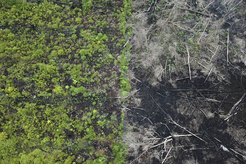 Razed peatlands are seen at the Rawa Singkil Wildlife Reserve in Trumon, South Aceh due to illegal land-clearing activities in Aceh, Indonesia on March 06, 2018.