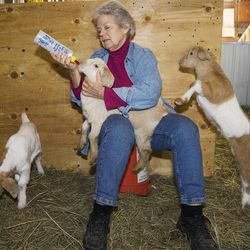 ADVANCE FOR USE SUNDAY, APRIL 1 AND THEREAFTER - In this photo taken March 23, 2012, Gillette Ransom, one of the two co-owners of the Cro'Hurst Farm in Elkhart, Ill., is seen with Leap Year triplet goats, Skip, left, Jump, with bottle, and Hop, all born on Feb. 29. Ransom and her farm business partner, Brett Conrady, only have 25 head of goats after a year of diligent ranching, but that's because they've already sold some, and they do have seven nannies expecting more kids.