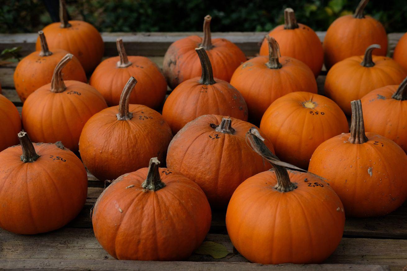 Pumpkin domicile Beilrode