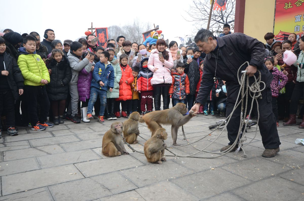 Monkey Show At Temple Fair In Xuchang