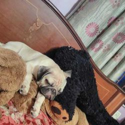 Same puppy + his own teddy bear