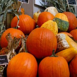 """Here's the <a href=""""http://twitter.com/#!/Eataly/status/129960126252720128"""" rel=""""nofollow"""">gourd display</a> at Eataly. Quite the bounty! <br />"""