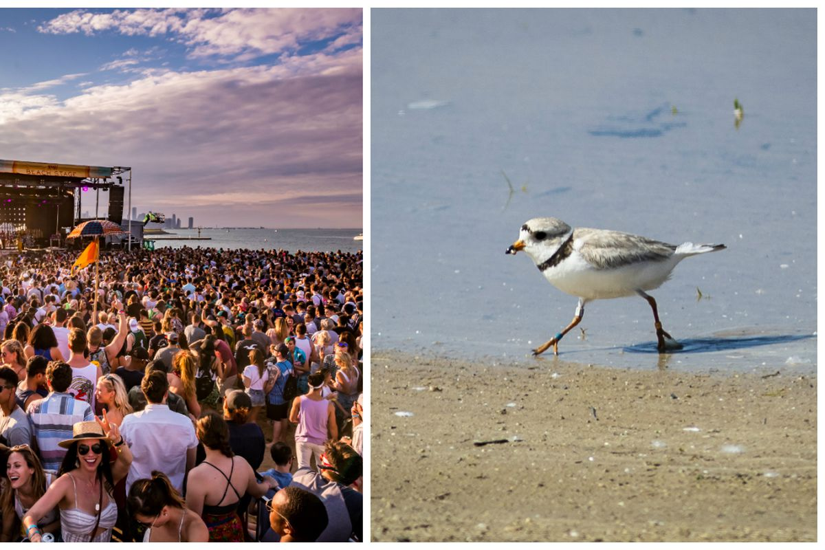 Birds-eye view of birders and MAMBY's battle for Montrose Beach shows no signs of compromise