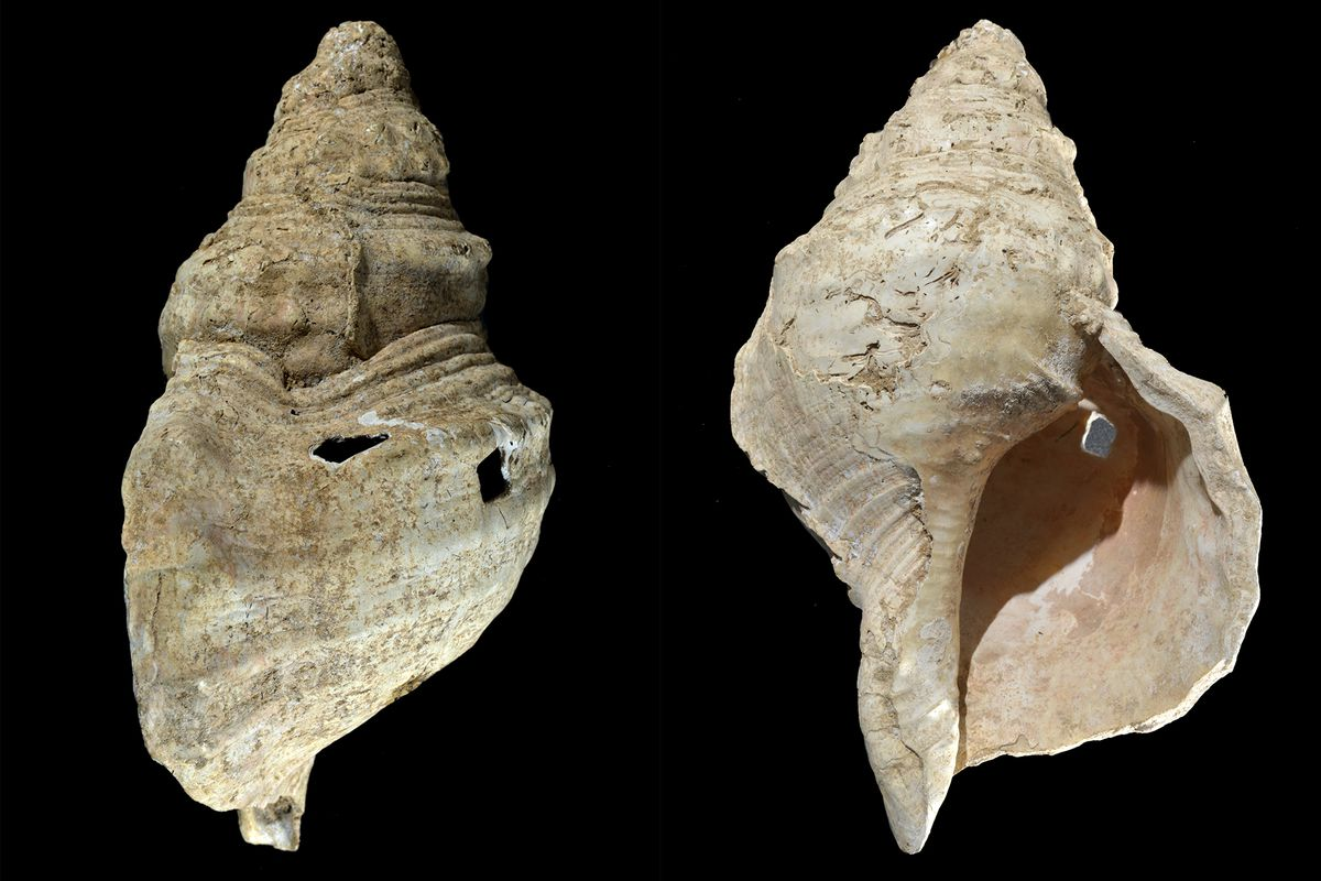 This combination of photos provided by researcher Carole Fritz in February 2021 shows two sides of a 12-inch conch shell discovered in a French cave with prehistoric wall paintings in 1931.