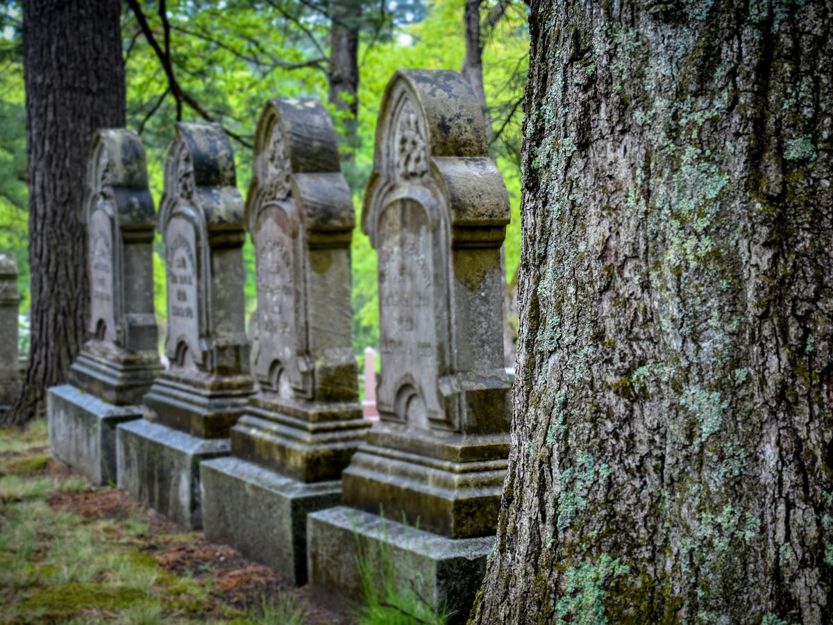 Four old headstones between two trees.