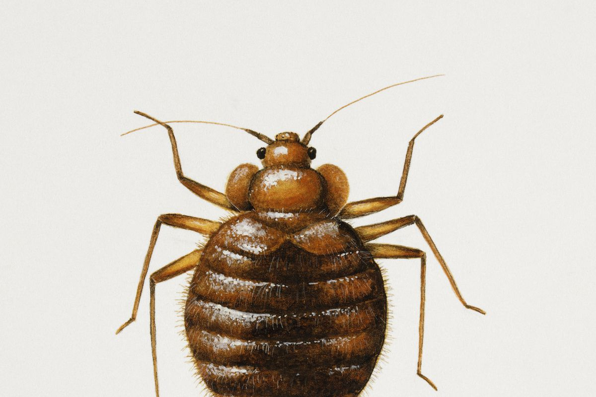 A bedbug joins the United Nations.