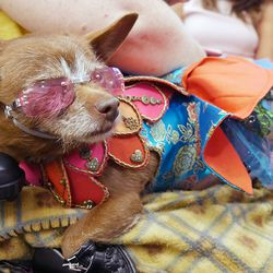 This dog's outfit is Ren Faire-meets-'70s retro perfection.