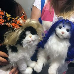 We don't really have words for these Cushzilla cat wigs. Yep, we said cat wigs.