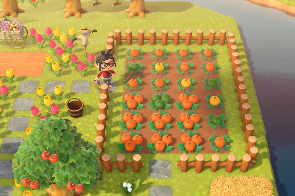 An Animal Crossing character stands with a field filled with pumpkins