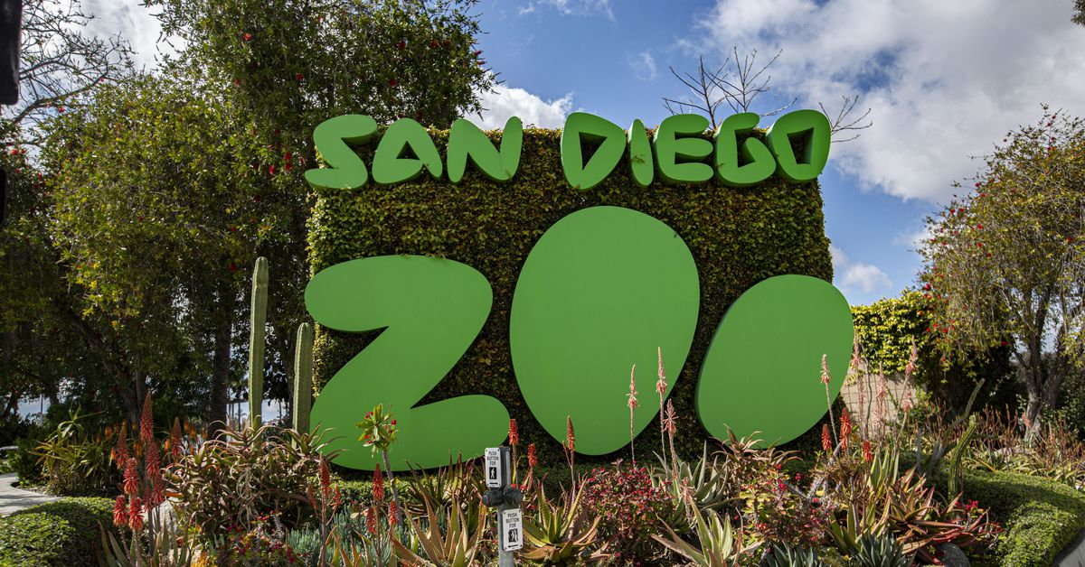 Great apes receive COVID-19 vaccine at San Diego Zoo