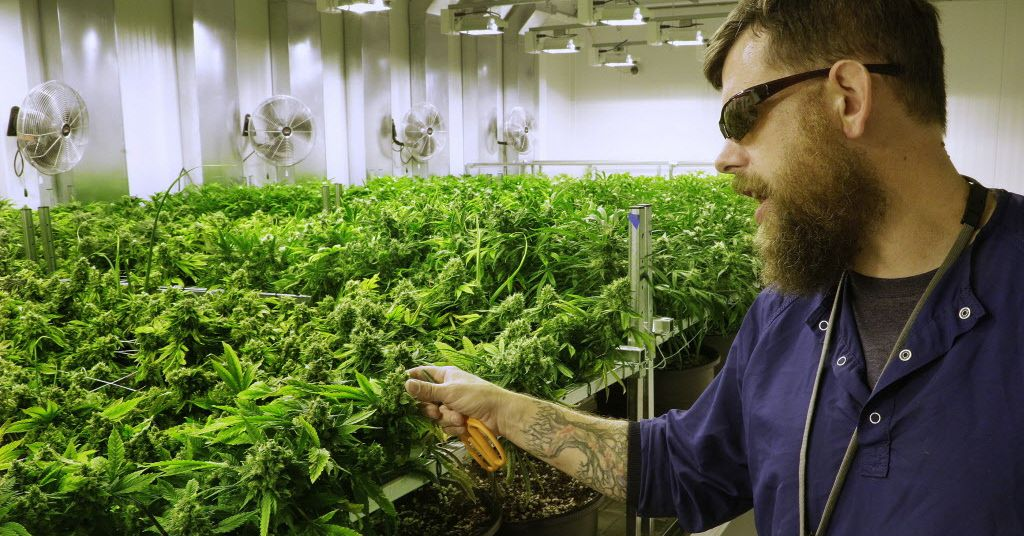 Illinois marijuana industry jobs: Here's who's hiring for the legal pot industry right now - Chicago Sun-Times
