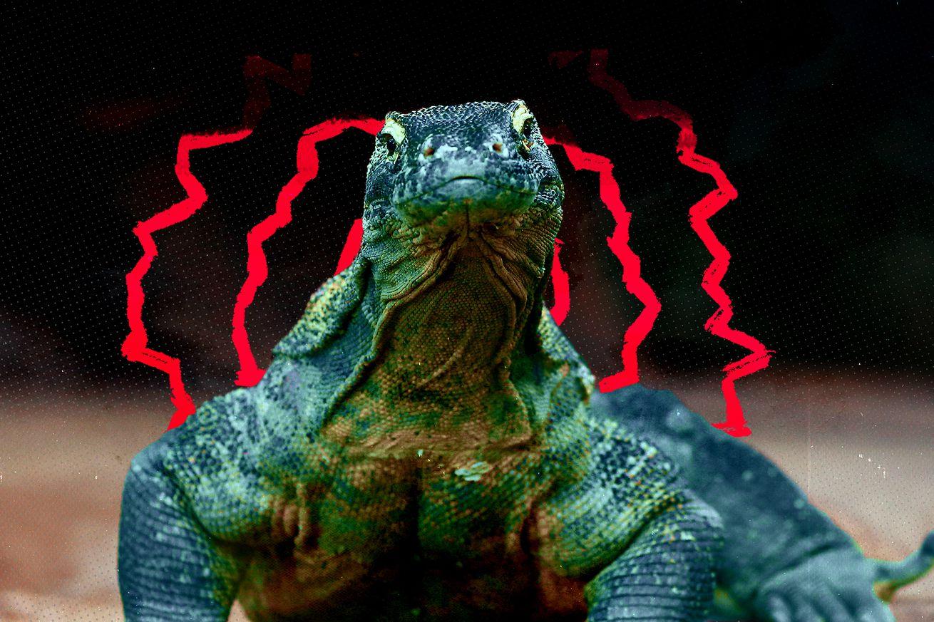 A Komodo dragon stares straight ahead.