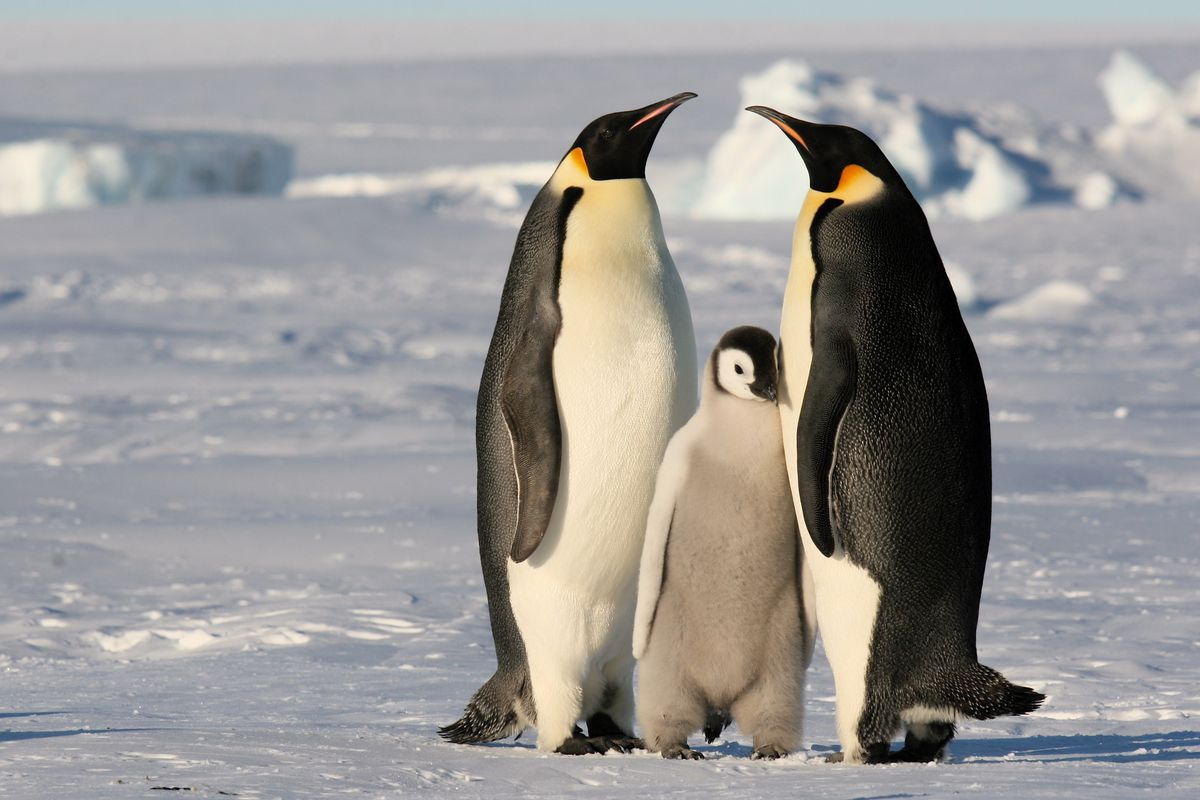 Antarctica's great. But no one lives there.