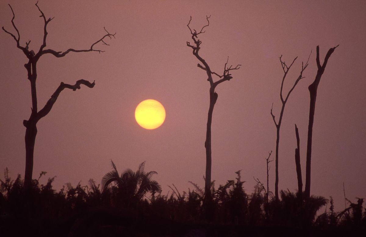 Burned trees in Amazon rainforest, land clearance for livestock. (Photo by Ricardo Beliel/Brazil Photos/LightRocket via Getty Images)
