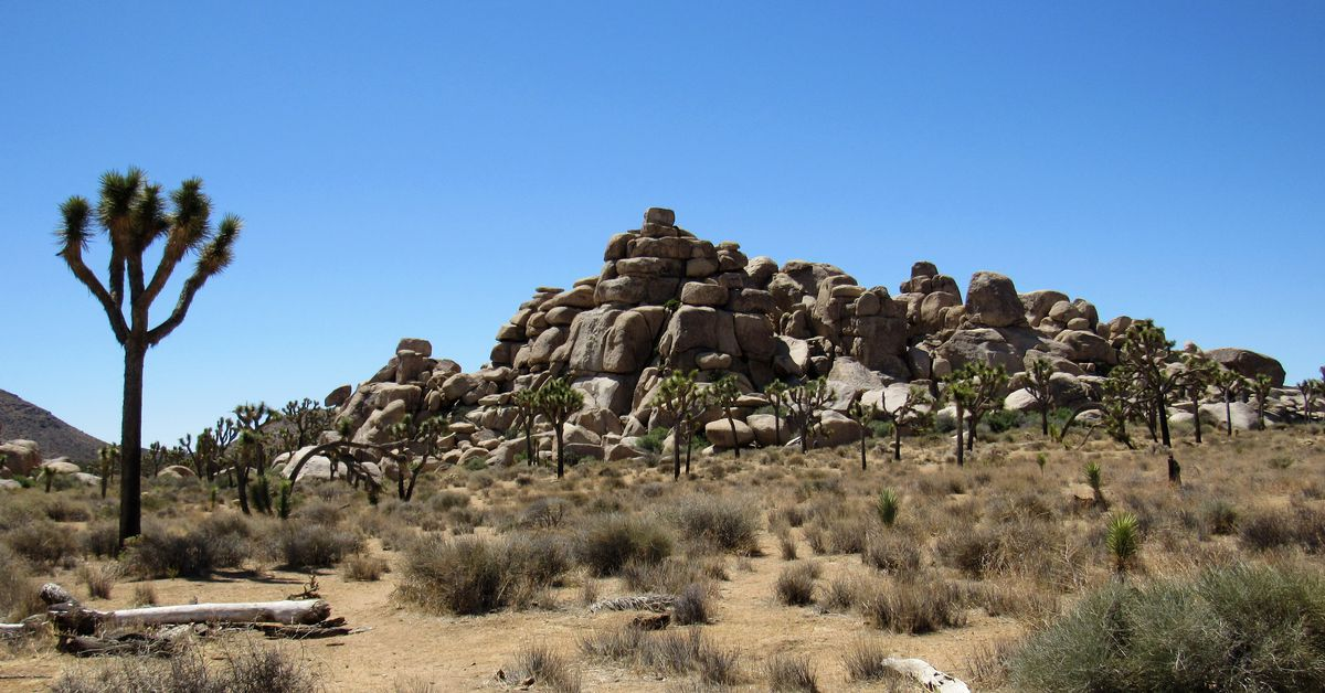 Joshua Tree National Park has been trashed in the shutdown. Now visitors are cutting down trees.