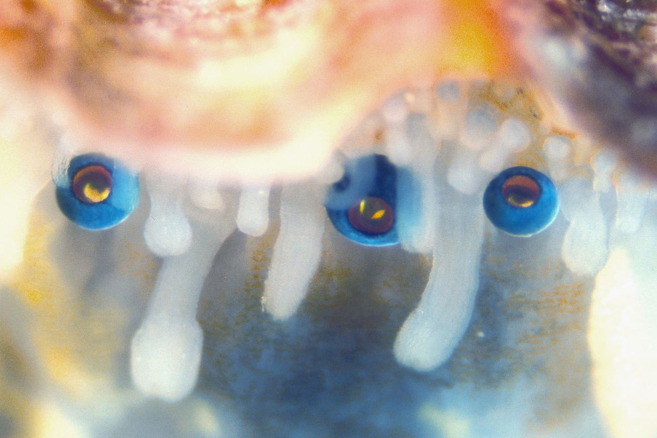 scallops use 200 eyes made of mirrors in order to see
