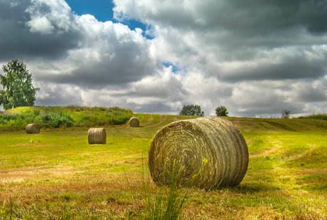 Farming Flickr