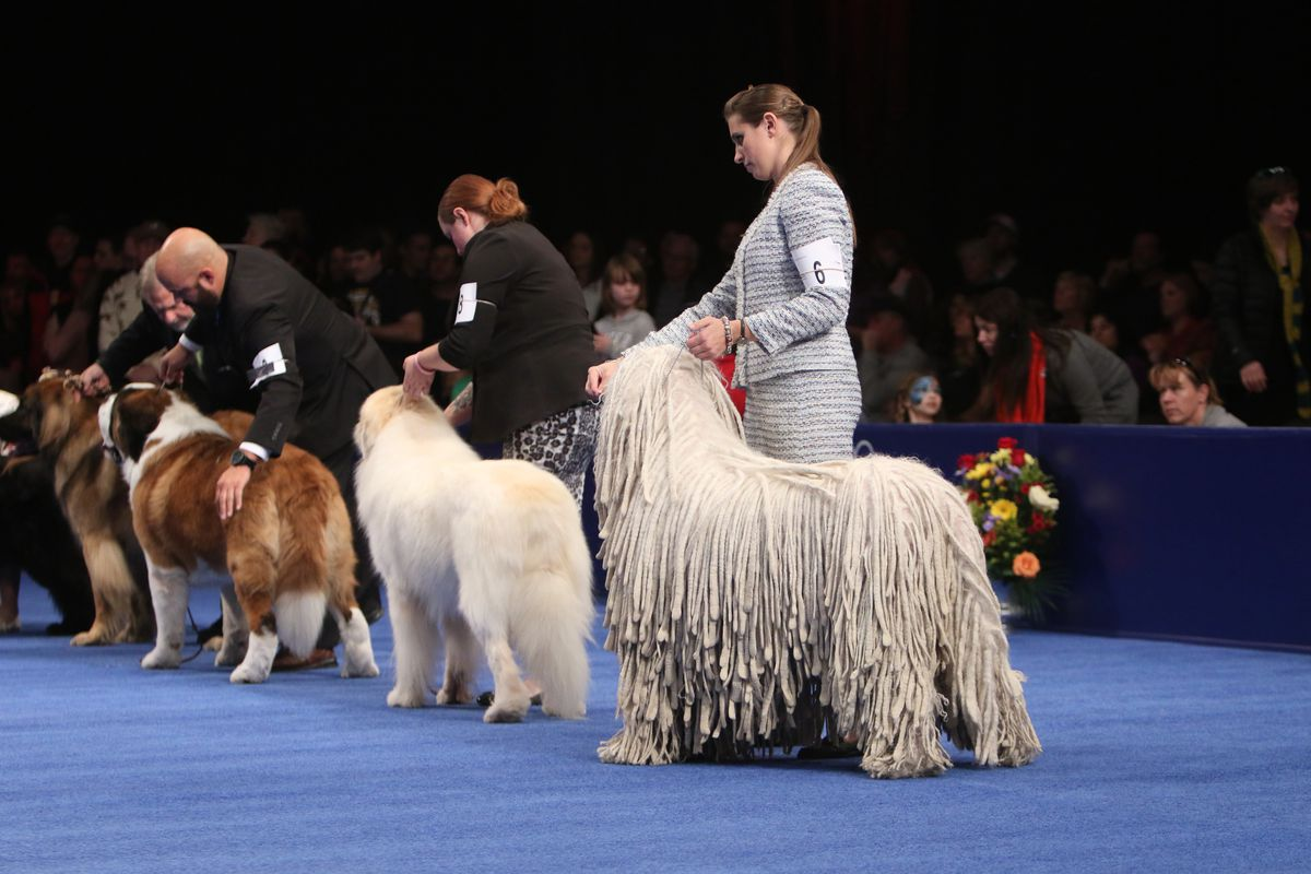 Nbc National Dog Show Breeds