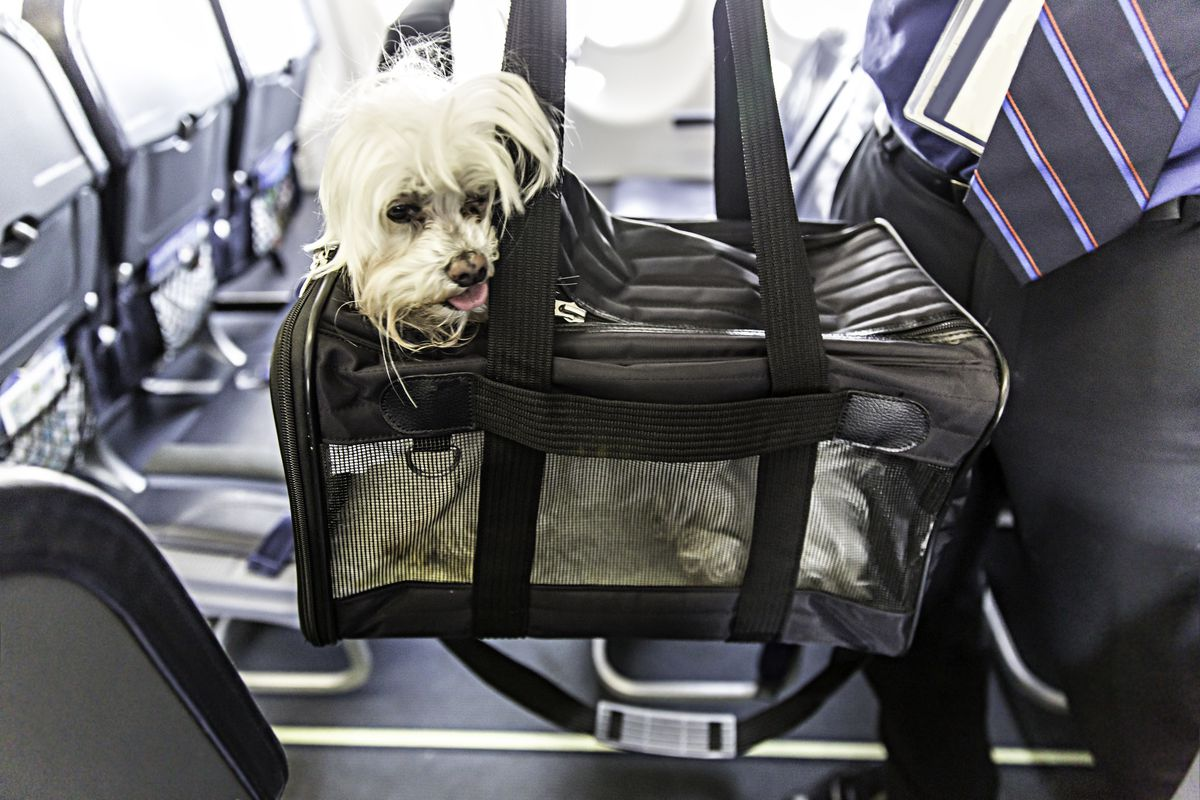 dog in a pet carrier at an airport