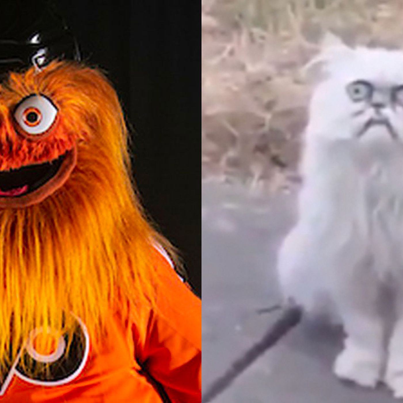 This freaky cat looks like Gritty and it's way too
