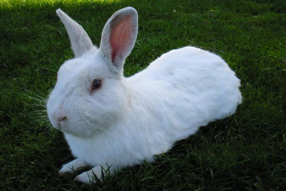 """I have decided that over the summer, whenever the Canucks trade or sign anyone, I will have a UVic bunny for the Squid pic.  (via <a href=""""http://image46.webshots.com/47/2/21/62/376822162kHEFGp_ph.jpg"""">image46.webshots.com</a>)"""