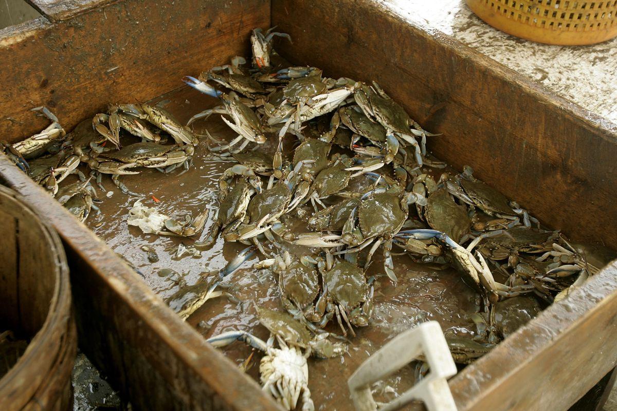 Maryland — or Virginia? —blue crabs.