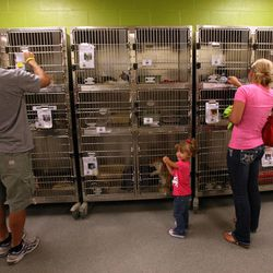 Brandon Moore, Cambrie Moore, and Shireece Moore look at cats to adopt at the West Valley City Animal Shelter in West Valley City on Saturday, Sept. 1, 2012.