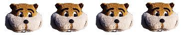 Goldy Head - 4