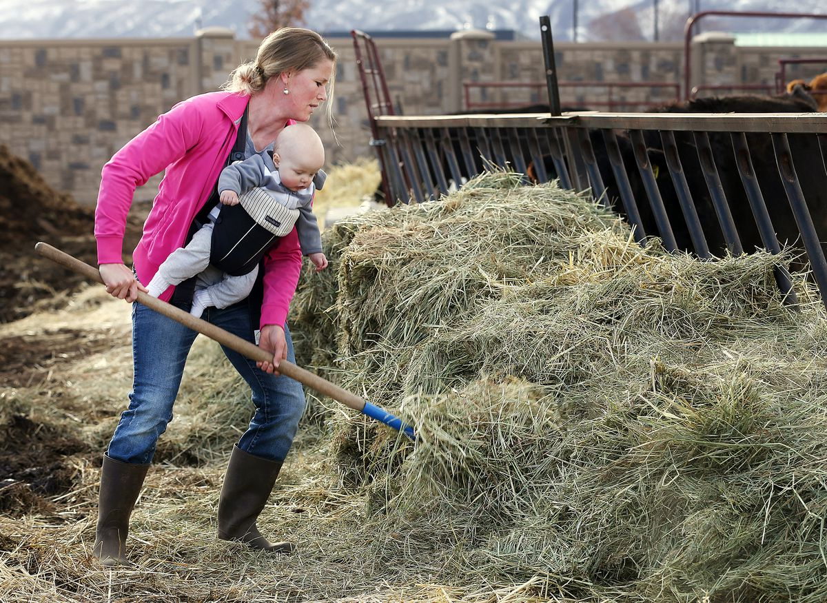 Jenn Hicken, carrying her youngest son Ren, uses a pitchfork to lift hay into the feed trough as she and her husband, Addison Hicken, work on their farm in Heber on Wednesday, March 11, 2020.