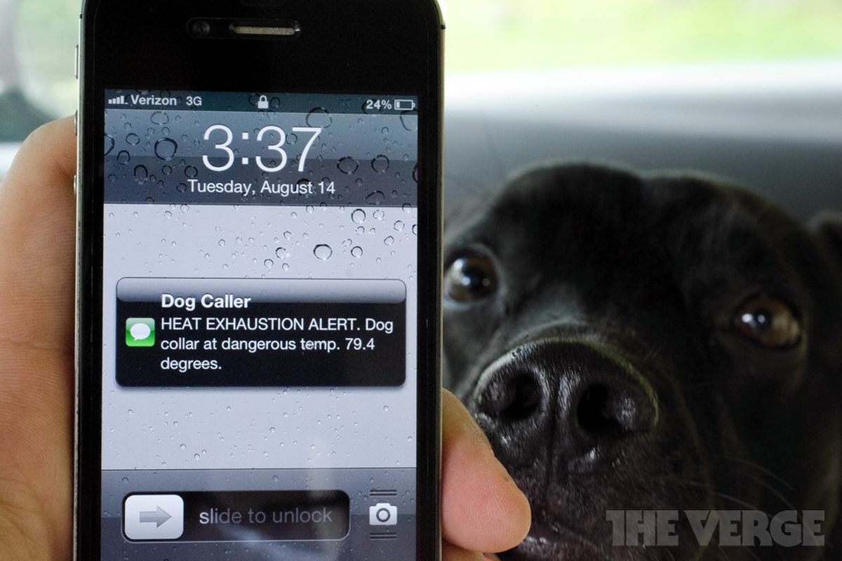 Dog Caller dog collar